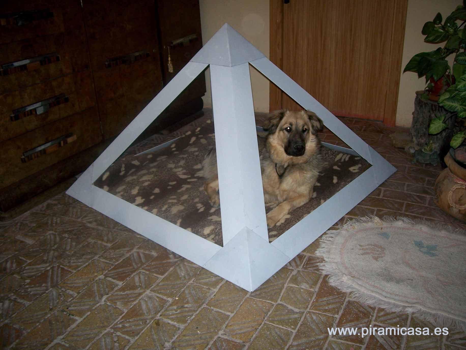 Piramides para mascotas for Interior de una piramide